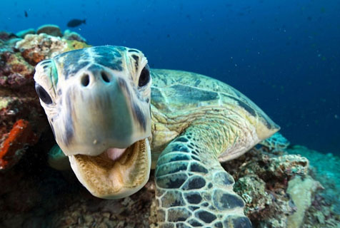 《蓝色星球II》美照揭秘神奇海底世界