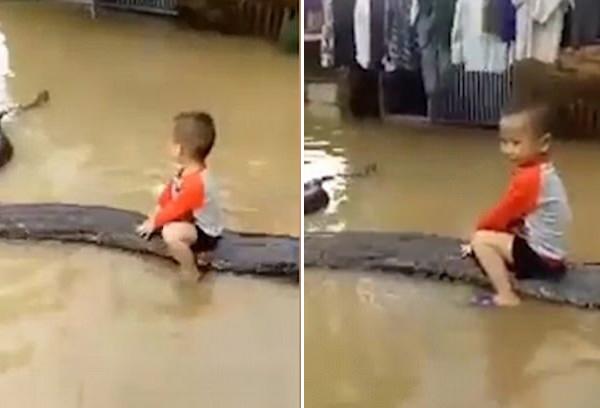 胆大!越南3岁男童身骑80公斤蟒蛇玩耍
