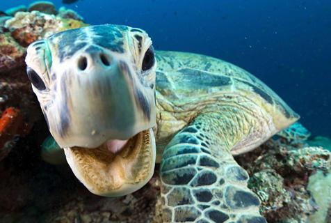 《蓝色星球II》揭秘神奇海底世界