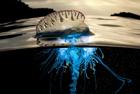 蓝色星球揭神奇海底世界