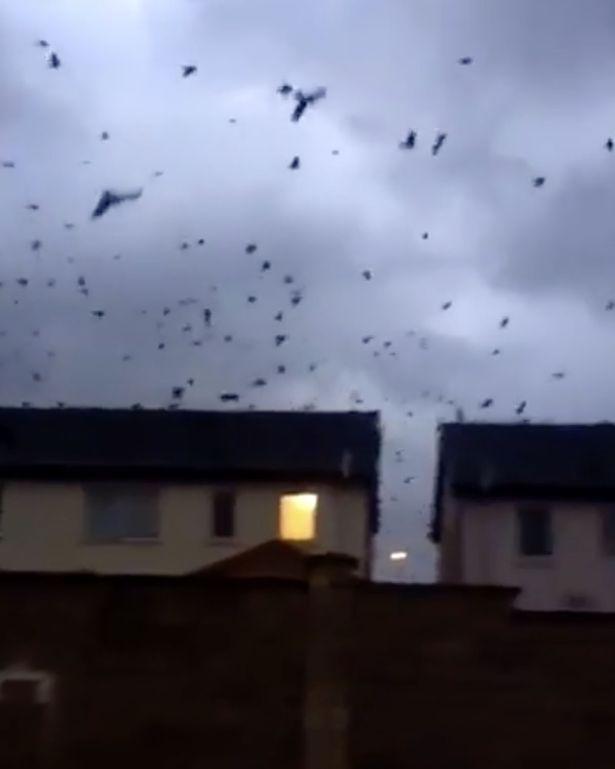 爱尔兰遭遇飓风袭击引数百鸟儿空中狂舞