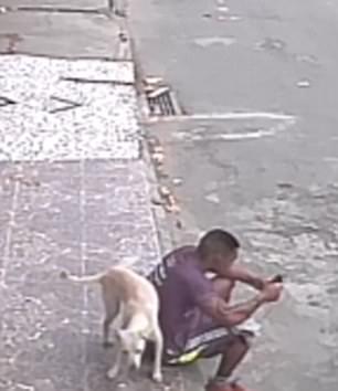 倒霉!巴西男子坐路边玩手机惨被小狗尿一身