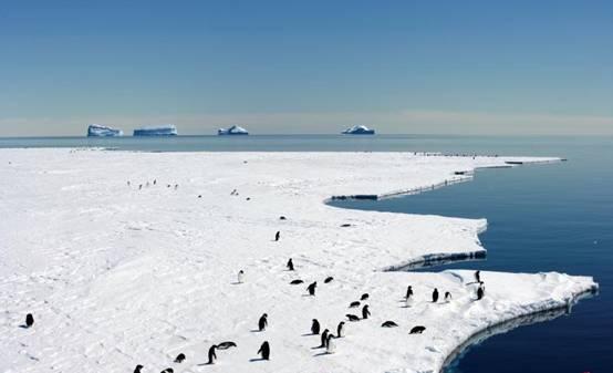 澳法推动在南极洲东部设全球最大海洋保护区计划
