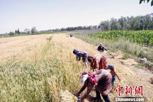 农业部:预计2017年中国粮食产量1.2万亿斤以上