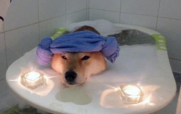 小狗狗乖巧享受烛光泡泡浴 舒服惬意