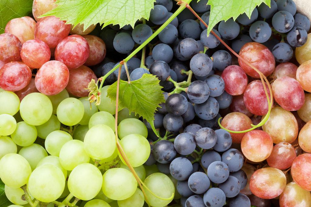 法媒:食用葡萄好处多 既补充营养又抗衰老