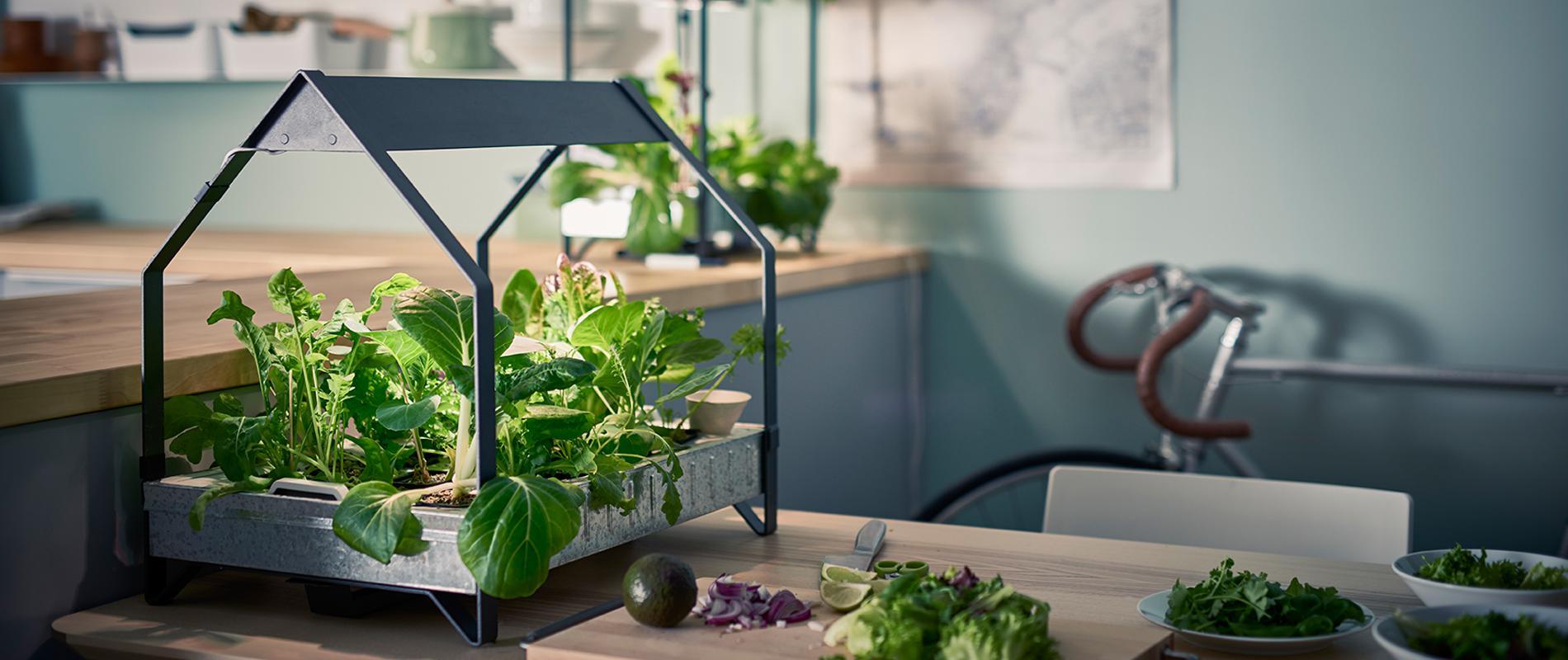 """健康环保又有趣 """"厨房菜园""""成蔬果种植新趋势"""