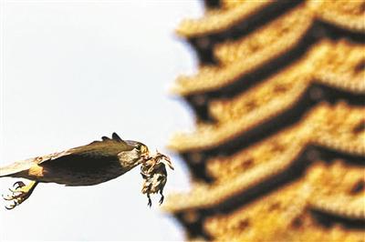 北大师生监测校园物种长达15年 记录超300种动物