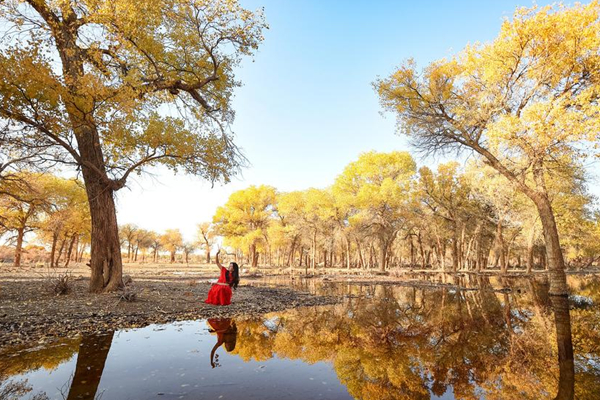 内蒙古阿拉善胡杨林 金秋一片迷人景色