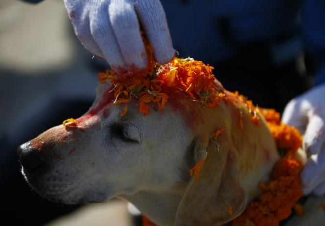 尼泊尔庆祝狗节