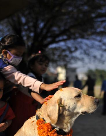 尼泊尔庆祝狗节 汪星人被涂脸敬仰