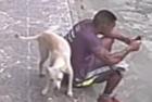 巴西男子惨被小狗尿一身