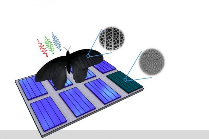 受蝴蝶翅膀启发 科学家开发吸光更强的太阳能板