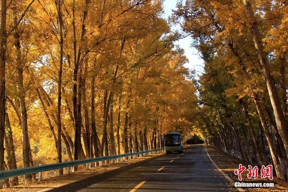 """新疆天山天池景区旅游公路变""""金色大道"""""""