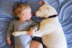 狗狗与小主人暖心相拥