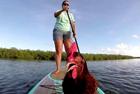 美女子带母鸡一起划桨