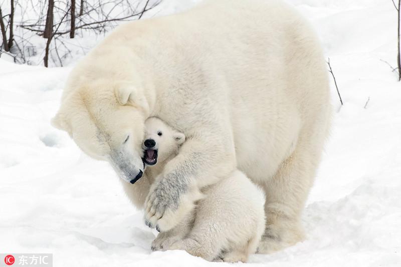 2017年10月26日报道,摄影师john daniels在芬兰拉努阿野生动物园旅游