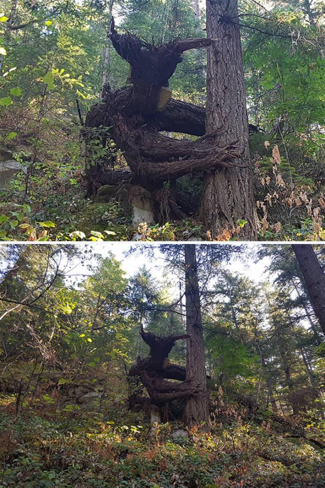 这些树大概是成精了图片