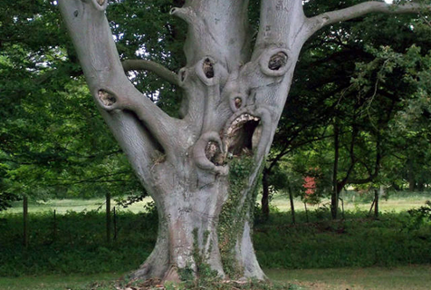 这些树大概是成精了