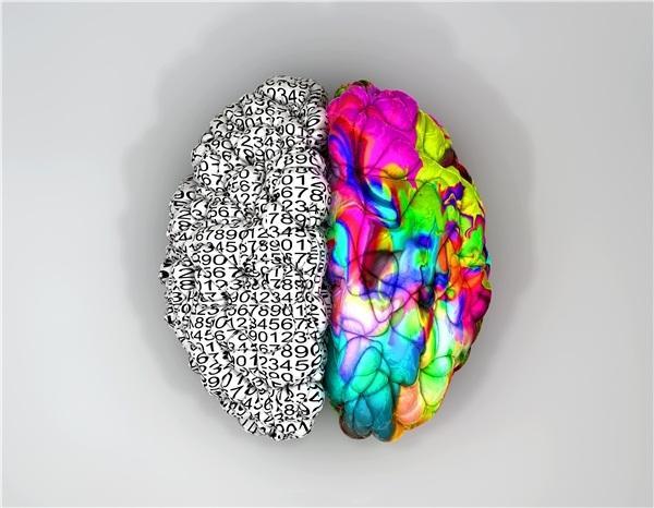 北京大学心理学教授解析大脑分工问题