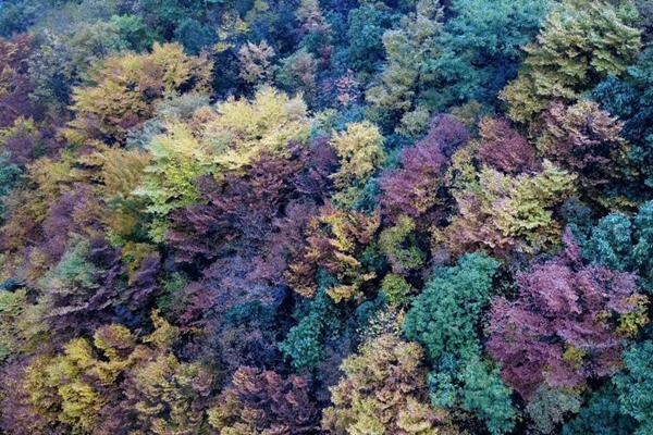 湖北五峰牛庄现绝美秋景 山林似天然调色板