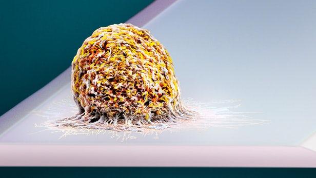 超灵敏的秤能够称出单个细胞的重量