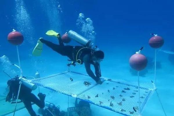 """她和团队花二十年在海底""""植树造林""""十万平米"""