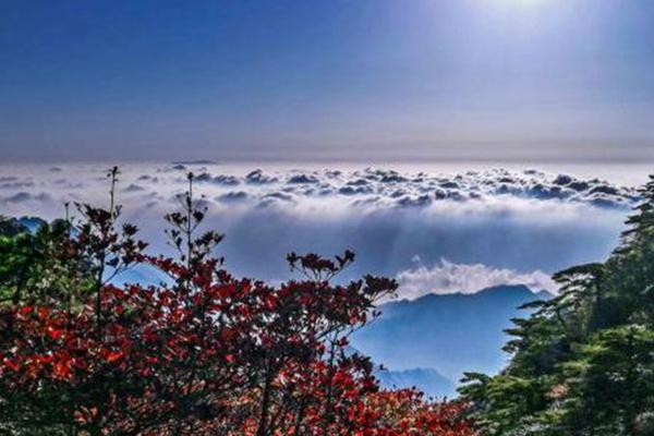 黄山进入最佳赏秋期 五彩斑斓的重阳节
