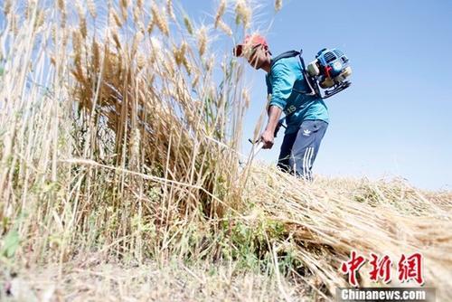 前三季度农业农村经济平稳 农民增收有托底