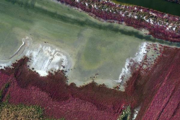 山西运城盐湖植被变红 远望如红色绒毯