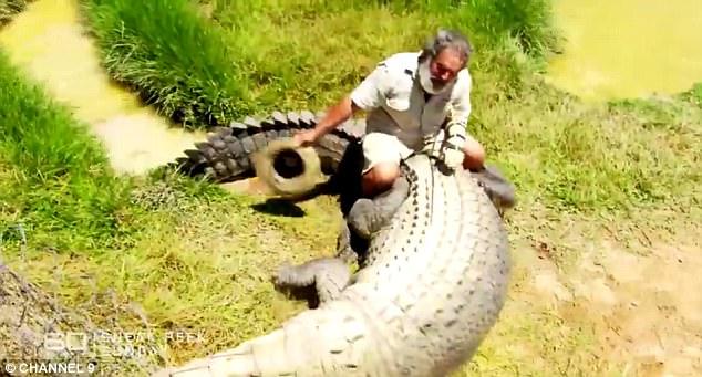 澳男子挑衅4.5米长鳄鱼 勇敢骑上后背徒手喂食