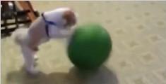 小狗上演专业拍球技能