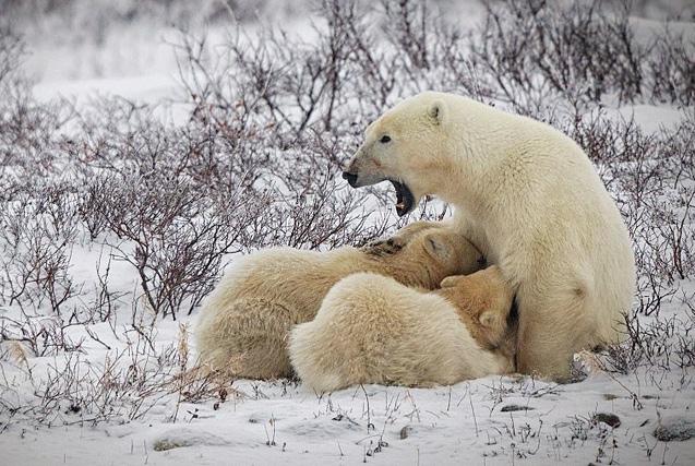 年度奇趣野生动物摄影大赛获奖作品