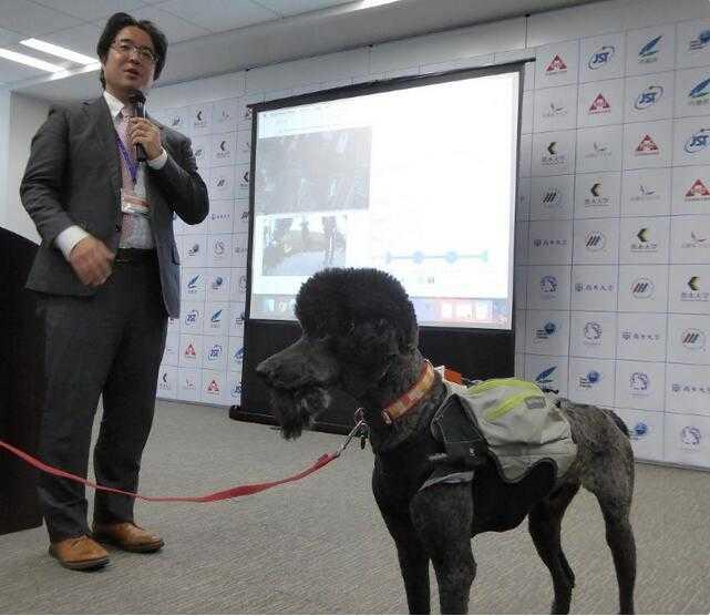 日本研发智能宠物装可推测救助犬干劲_促使犬类高效救援