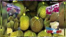马来西亚榴莲节即将在南宁举办