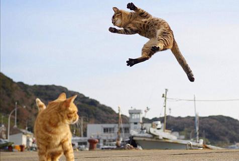 """日本摄影师抓拍""""功夫猫咪""""身手敏捷"""