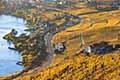 瑞士葡萄园秋景迷人