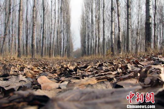 七旬老人坚持种树14年 55亩戈壁荒滩变林带