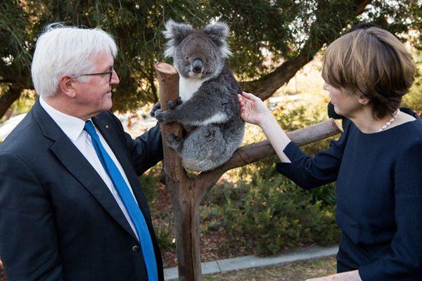 德国总统夫妇出访澳洲 逗可爱考拉画面搞笑