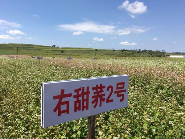 【领航新征程】山西省将大力推进农业标准化生产