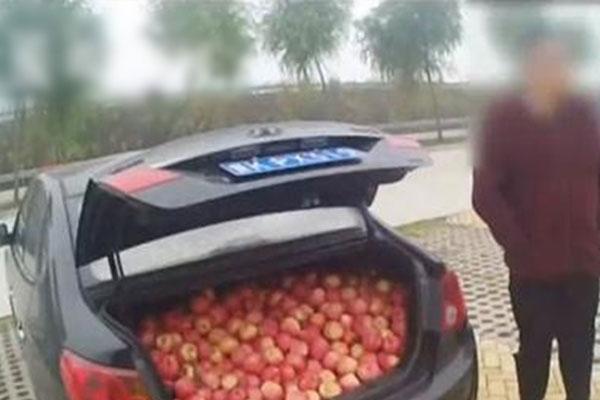 3男子趁大雾在高速偷摘480斤苹果