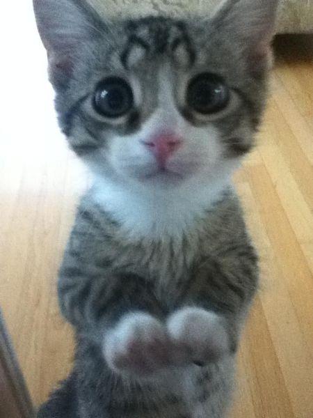 我这么可爱你喜欢我吗图片