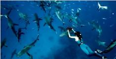 澳女子与鲨鱼相伴12年