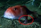 英电视节目拍到海中怪鱼
