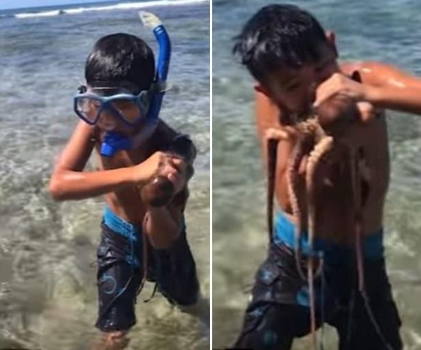 美国一男子教10岁儿子如何咬死章鱼