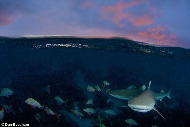 《蓝色星球2》工作人员拍摄时遭遇大白鲨袭击