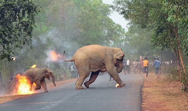 虐心!照片曝光印度村民向大象扔火球