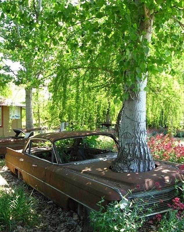 长成这样的树真是霸气十足图片