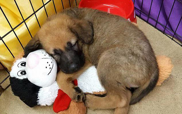 """能睡一觉的""""狗生""""多么幸福图片"""