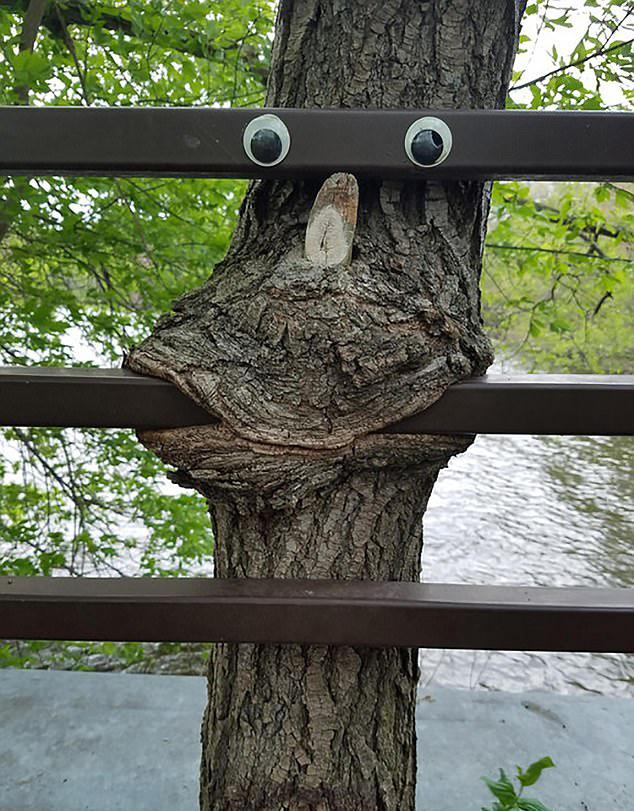 举起手来,你已经被树包围了图片